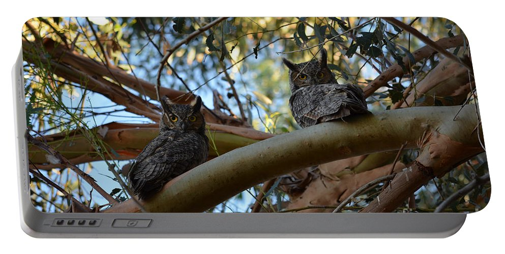 Great Horned Owls Portable Battery Charger featuring the photograph Pair Of Great Horned Owls by Afroditi Katsikis