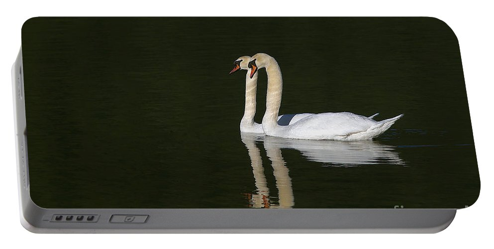 Mute Swans Portable Battery Charger featuring the photograph Pair Of Mute Swans by Sharon Talson