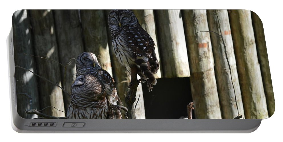 Owl Portable Battery Charger featuring the photograph Pair Of Owls by Linda Kerkau