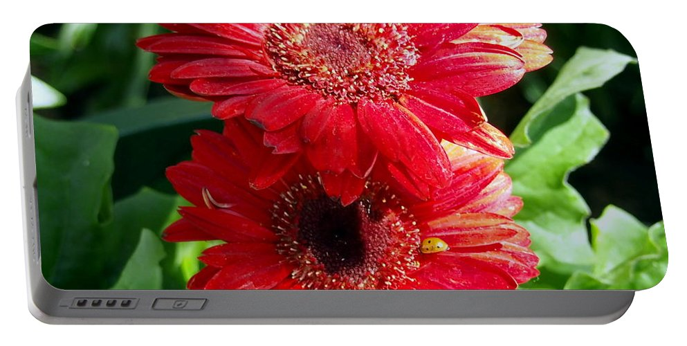 Nature Portable Battery Charger featuring the photograph Pair Of Red Gerber Daisy Flowers With Ladybug by Amy McDaniel
