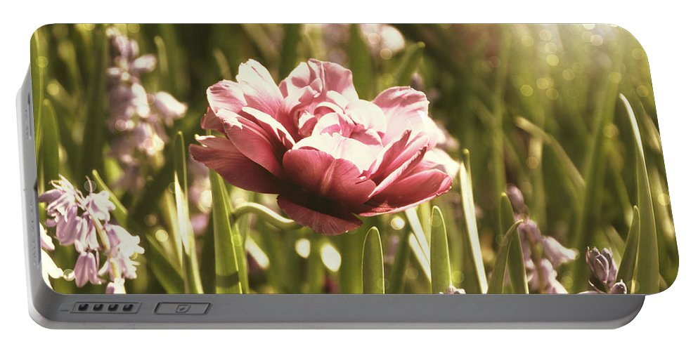 Flower Portable Battery Charger featuring the photograph Pale Flowers by Tina Meador