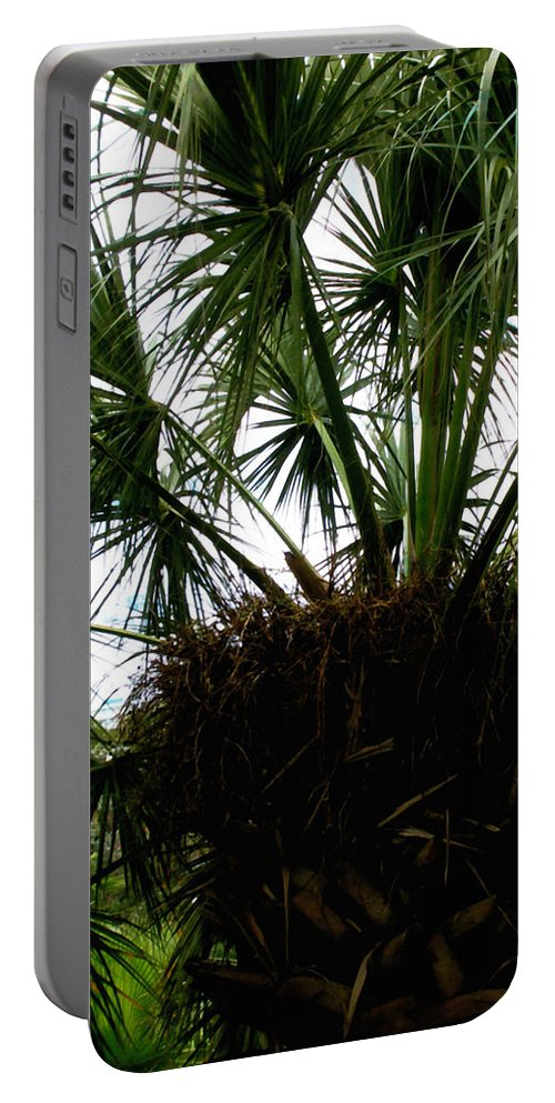 Tree Portable Battery Charger featuring the photograph Palm Tree In Curacao by Glenn Aker
