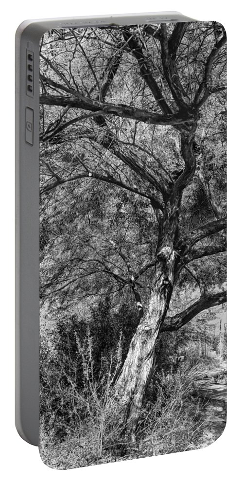 Palo Verde Portable Battery Charger featuring the photograph Palo Verde In Black And White by C H Apperson