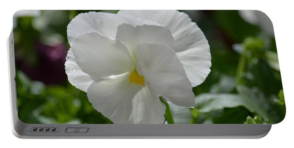 Pansy Purity Portable Battery Charger featuring the photograph Pansy Purity by Maria Urso