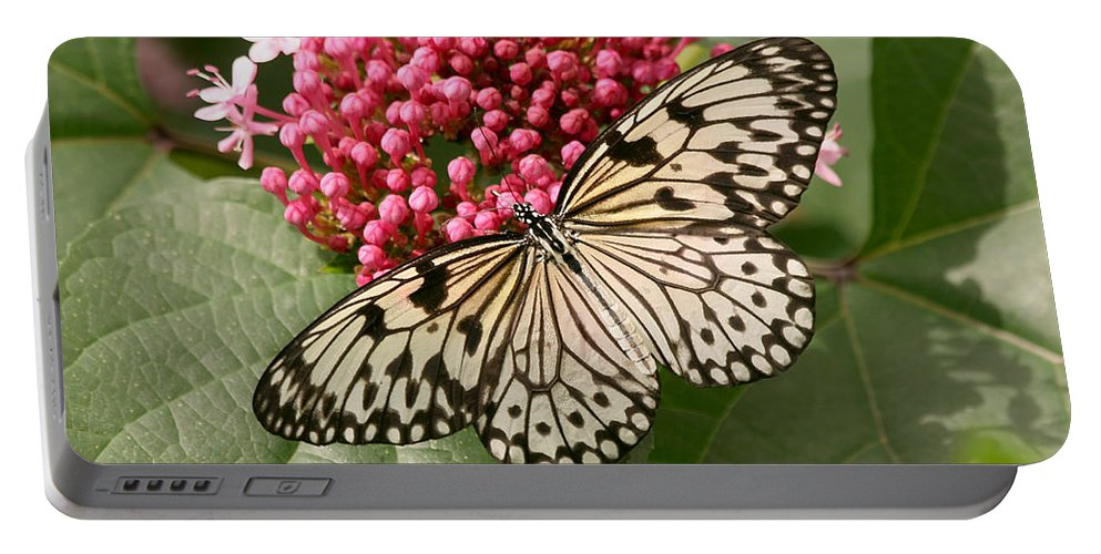 Butterfly Portable Battery Charger featuring the photograph Paper Kite Butterfly by Kim Hojnacki