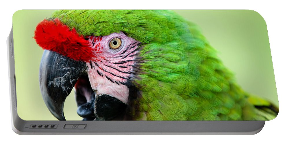 Parrot Portable Battery Charger featuring the photograph Parrot by Sebastian Musial