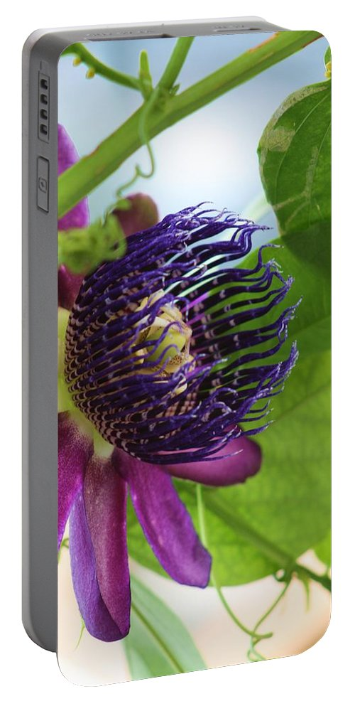 Passion Portable Battery Charger featuring the photograph Passion Flower by Chuck Hicks
