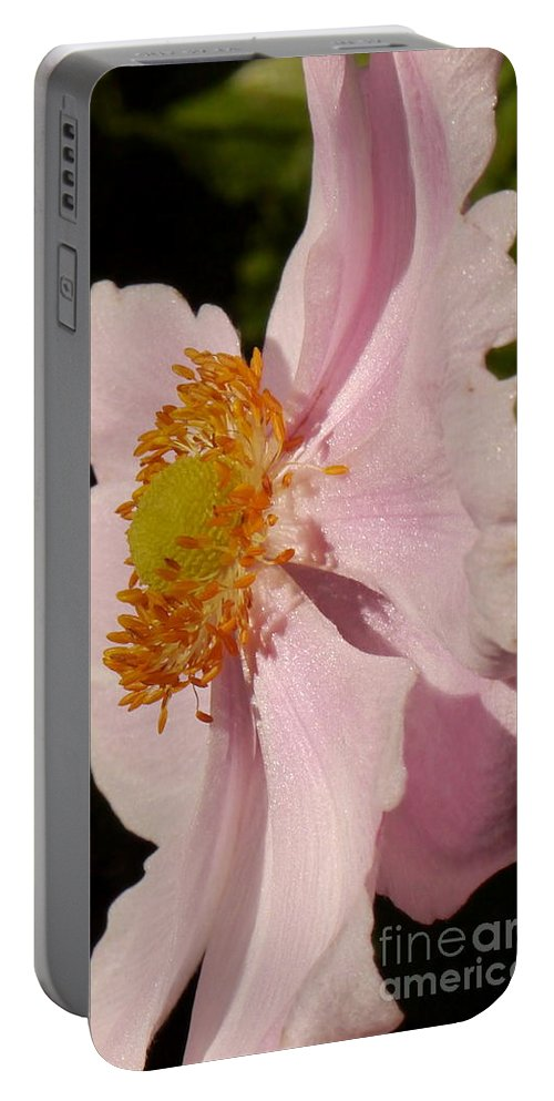 Mallow Portable Battery Charger featuring the photograph Pastel Pink Mallow by Christiane Schulze Art And Photography