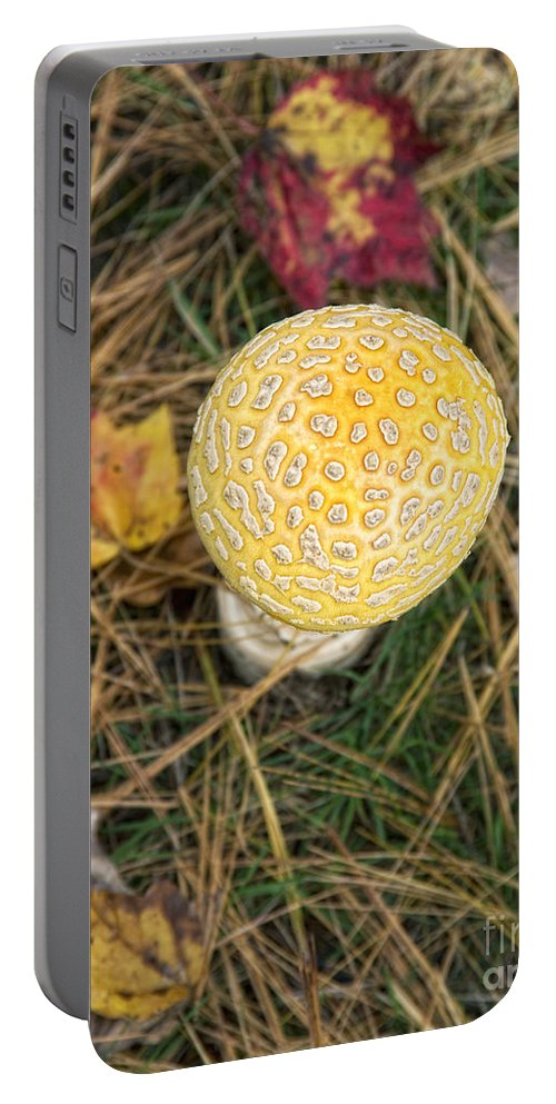 Nature Portable Battery Charger featuring the photograph Patterned by Claudia Kuhn