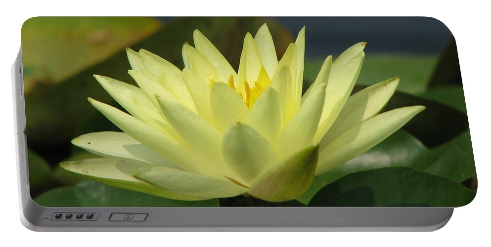Lillies Portable Battery Charger featuring the photograph Peace by Amanda Barcon