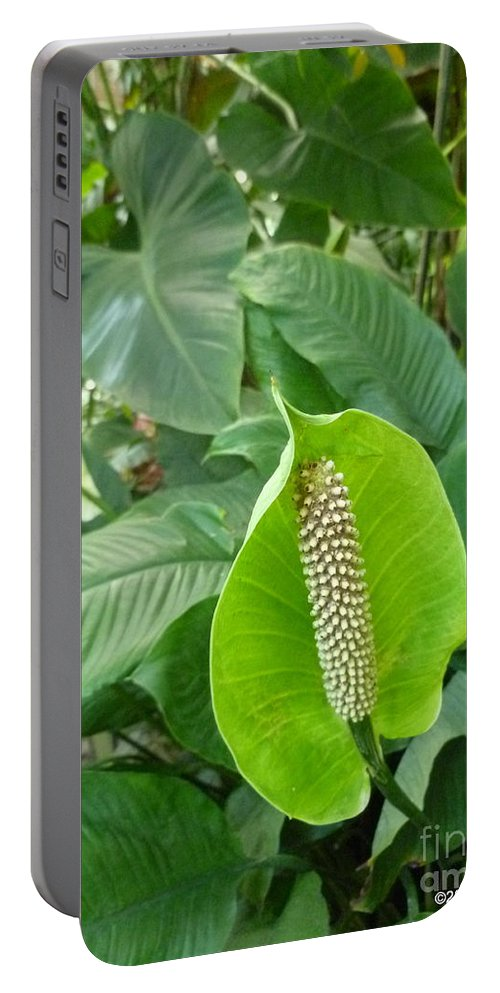 Foliage Portable Battery Charger featuring the photograph Peace Lily by Lingfai Leung