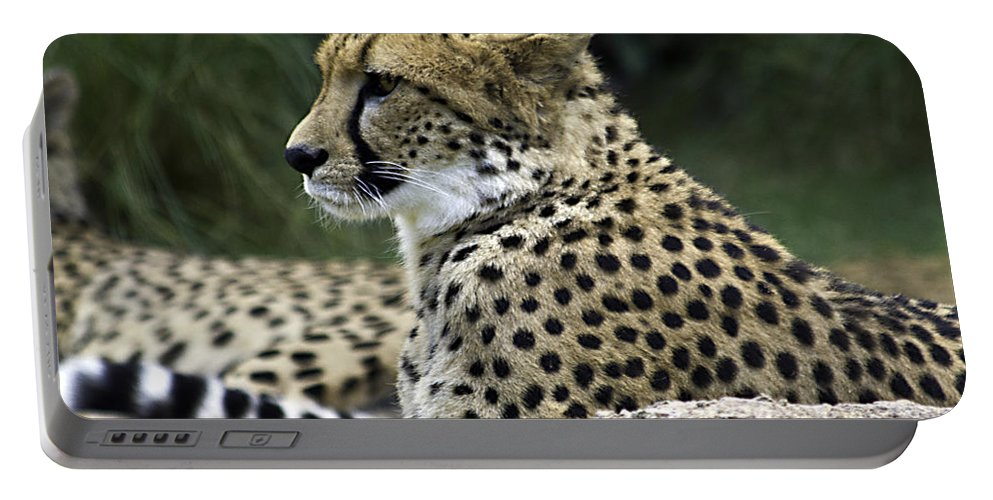 Tigers Portable Battery Charger featuring the photograph Peaceful by Ken Frischkorn
