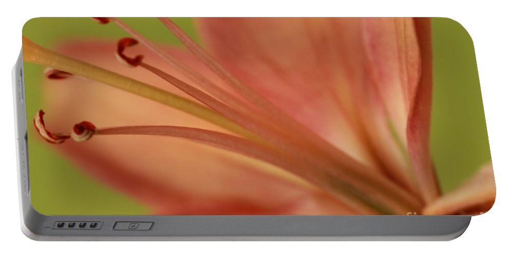 Lily Lilies Portable Battery Charger featuring the photograph Peach Lily 1 by Joseph Marquis