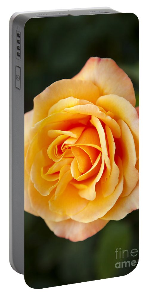 Yellow Portable Battery Charger featuring the photograph Peach Rose by Brian Jannsen