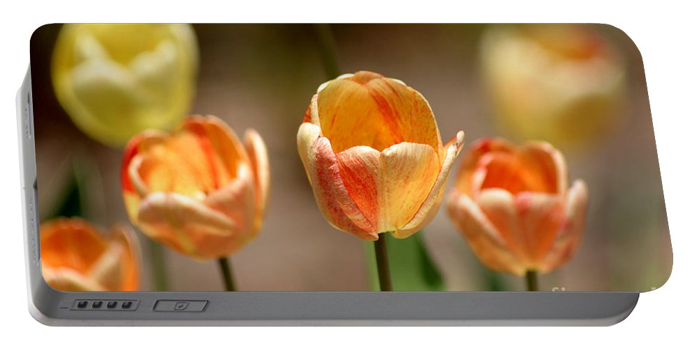 Tulips Portable Battery Charger featuring the photograph Peaches And Cream by Living Color Photography Lorraine Lynch