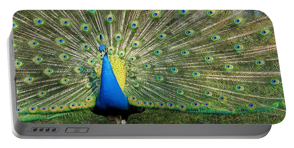 Peacock Portable Battery Charger featuring the photograph Peacock by Jatinkumar Thakkar