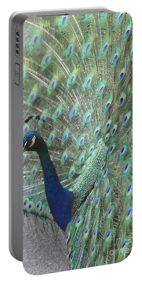 Peacocks Portable Battery Charger featuring the photograph Peacock by Jeffery L Bowers