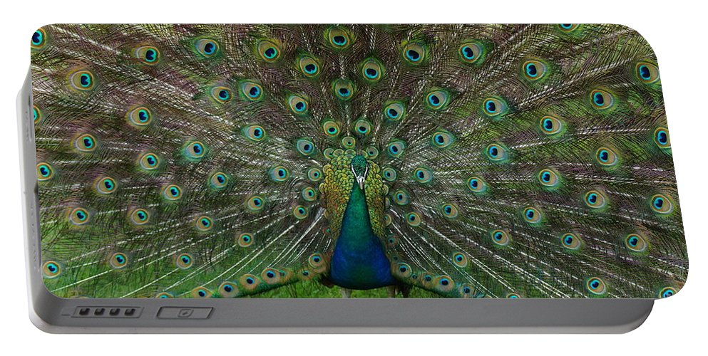 Peacock Feathers Portable Battery Charger featuring the photograph Peacock by Jeffery L Bowers