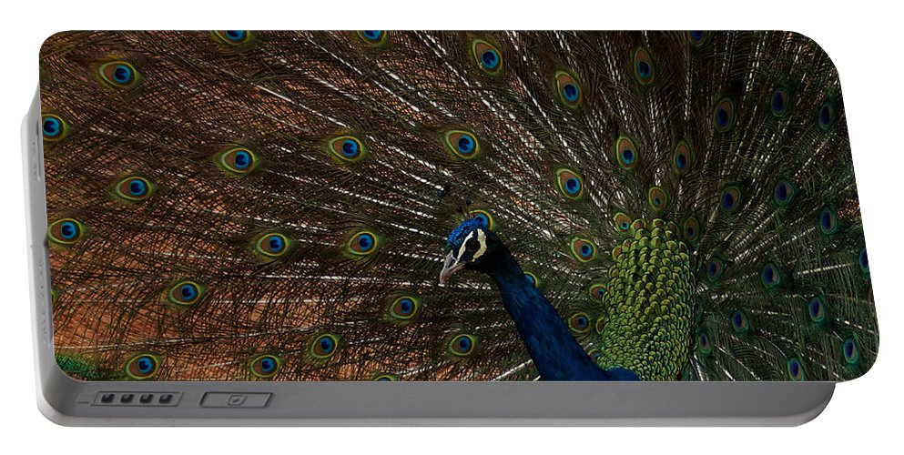 Peacock Portable Battery Charger featuring the photograph Peacock Show Off by Ernie Echols