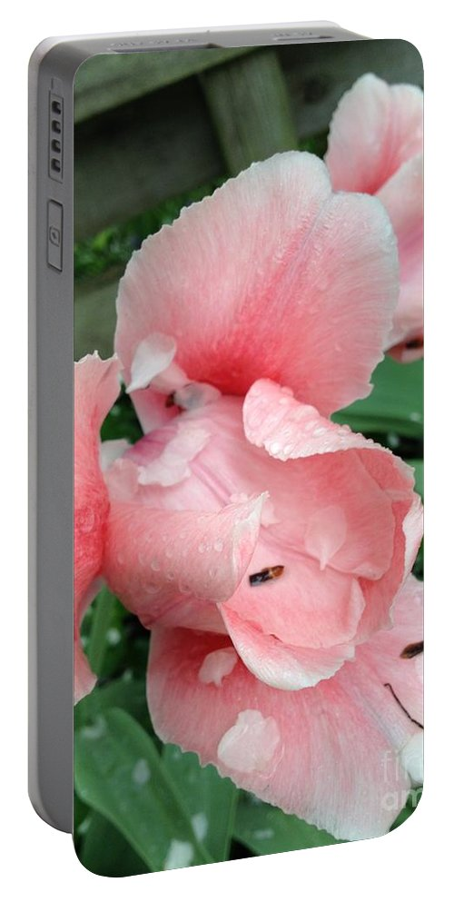 Pear Blossoms Portable Battery Charger featuring the photograph Pear Blossoms by Joseph Yarbrough