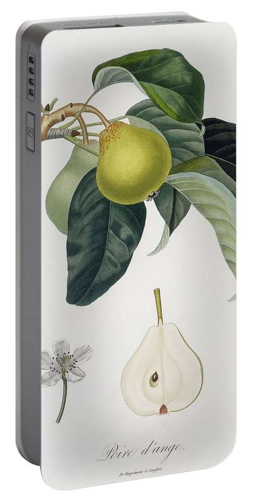 Pear Portable Battery Charger featuring the painting Pear by Pierre Antoine Poiteau
