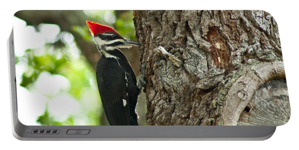 Woodpecker Portable Battery Charger featuring the photograph Pecking Woodpecker by Stephen Whalen