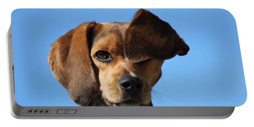 Animal Portable Battery Charger featuring the photograph Peek A Boo by Davandra Cribbie