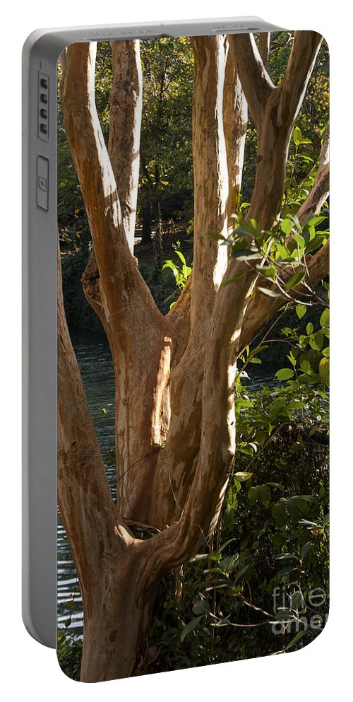 San Antonio Texas River Walk Rivers Water Crape Myrtle Tree Trees Riverwalk Portable Battery Charger featuring the photograph Peeling by Bob Phillips