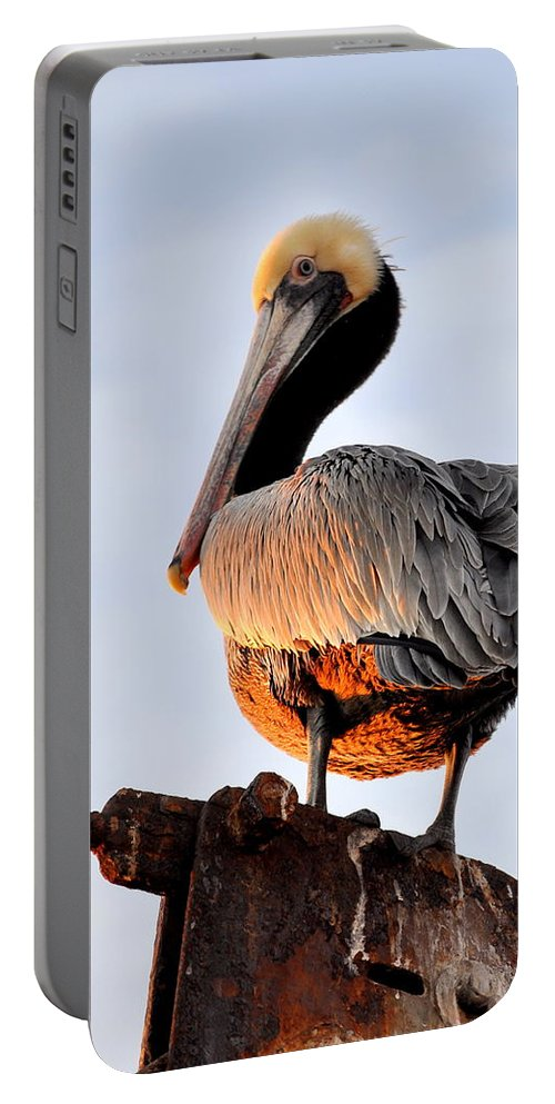 Birds Portable Battery Charger featuring the photograph Pelican Looking Back by AJ Schibig