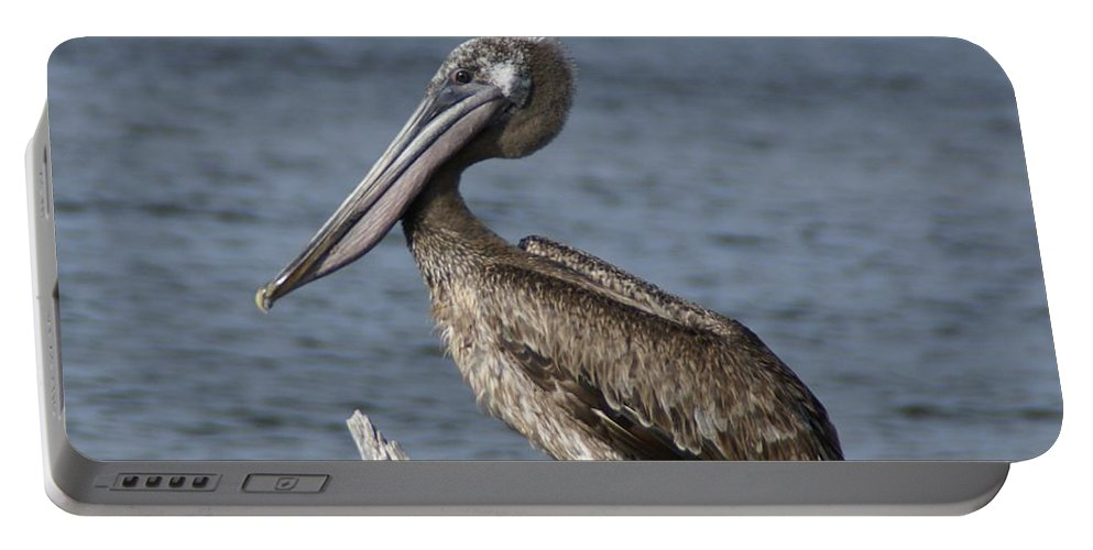Pelican Portable Battery Charger featuring the photograph Pelican On Driftwood by Patricia Twardzik