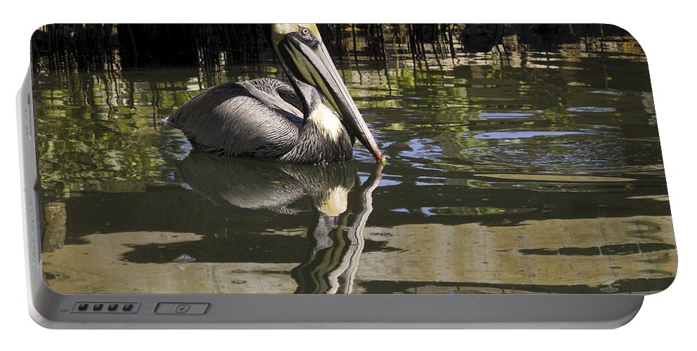 American Brown Pelican Swimming Portable Battery Charger featuring the photograph Pelican Reflected by Sally Weigand