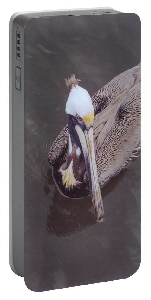 Matlacha Portable Battery Charger featuring the photograph Pelican by Robert Floyd