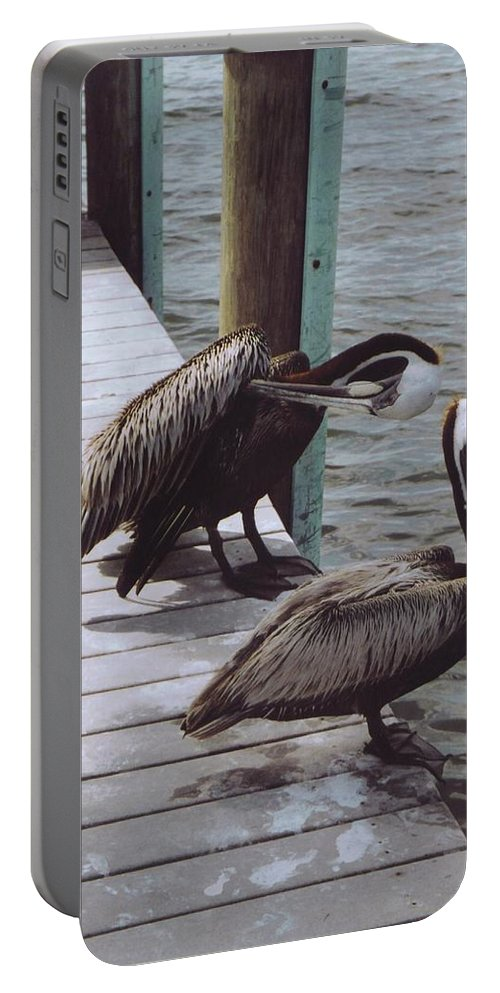 Matlacha Portable Battery Charger featuring the photograph Pelicans by Robert Floyd