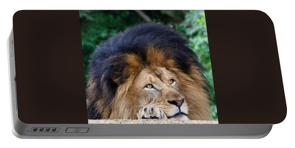 National Zoo Portable Battery Charger featuring the photograph Pensive Lion by Georgette Grossman