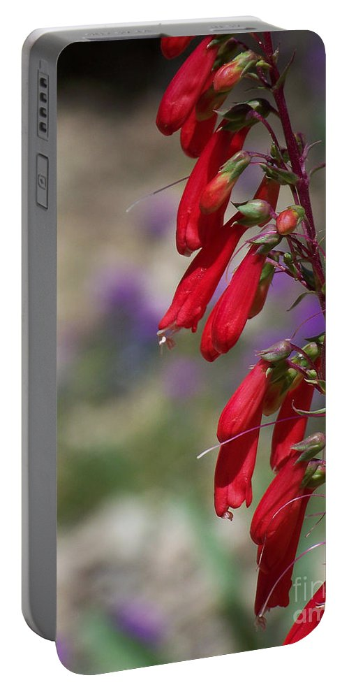 Flowers Portable Battery Charger featuring the photograph Penstemon by Kathy McClure