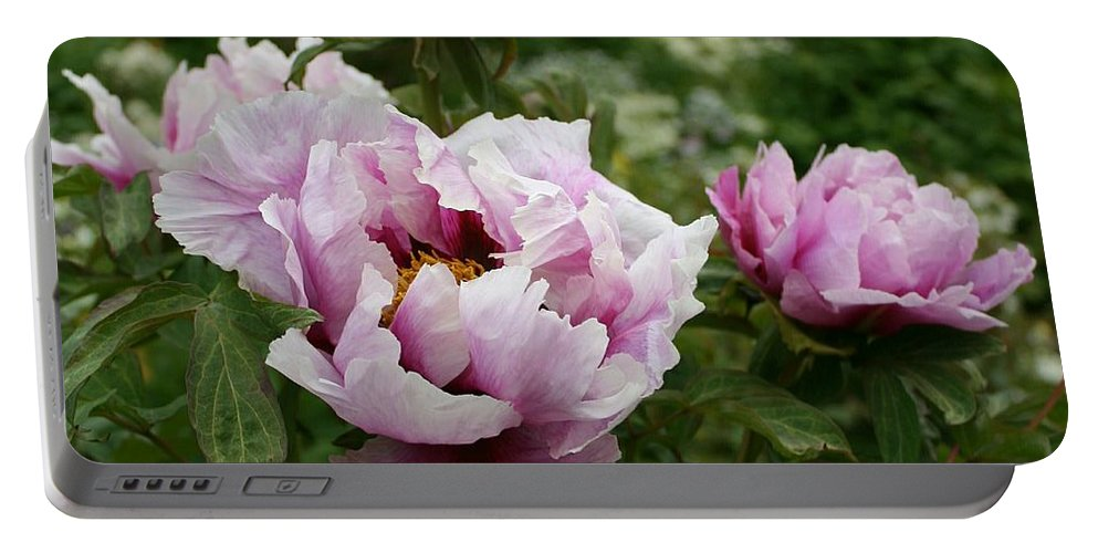Peony Portable Battery Charger featuring the photograph Peony Bush by Christiane Schulze Art And Photography