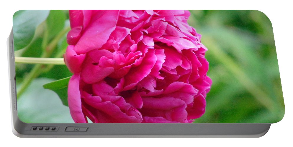 Peony Portable Battery Charger featuring the photograph Peony by Karen Capehart