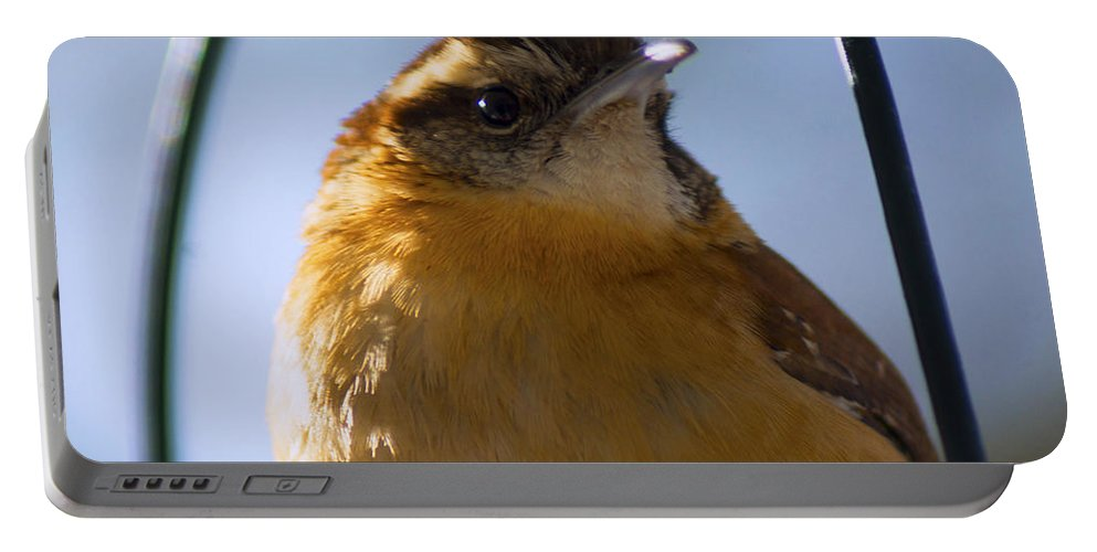 Bird Portable Battery Charger featuring the photograph Perched Portrait by Joe Geraci