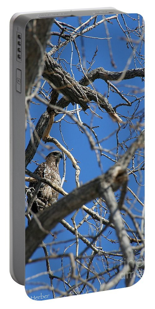 Bird Portable Battery Charger featuring the photograph Perched by Susan Herber