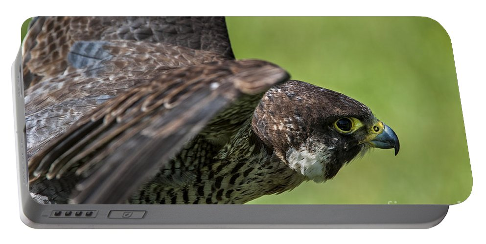 Peregrine Falcon Portable Battery Charger featuring the photograph Peregrine Falcon 4 by Arterra Picture Library