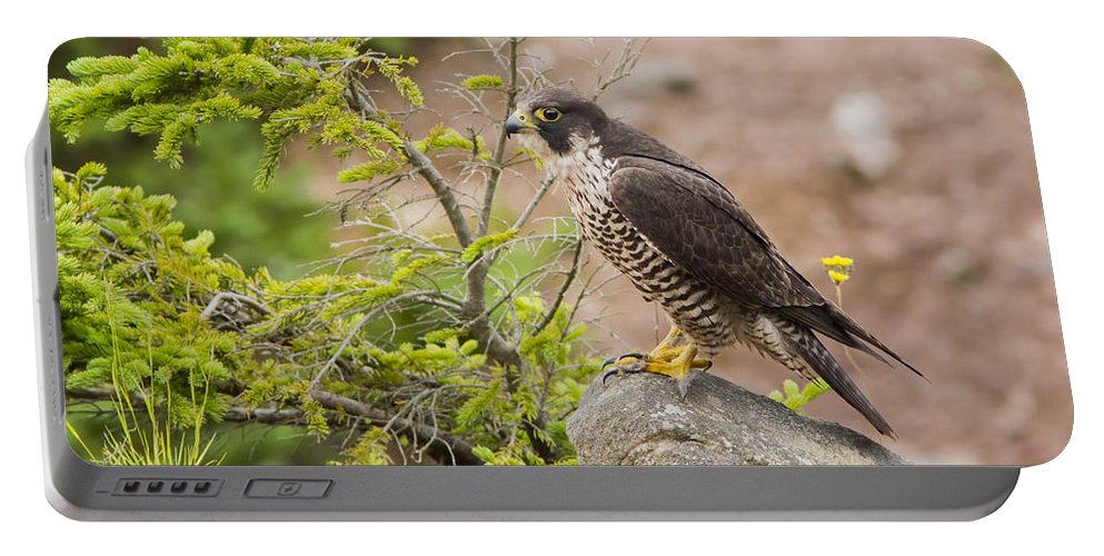 Hawk Portable Battery Charger featuring the photograph Peregrine Falcon by Mircea Costina Photography