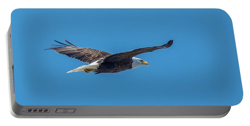 Bird Portable Battery Charger featuring the photograph Perfect Bald Eagle by Cheryl Baxter
