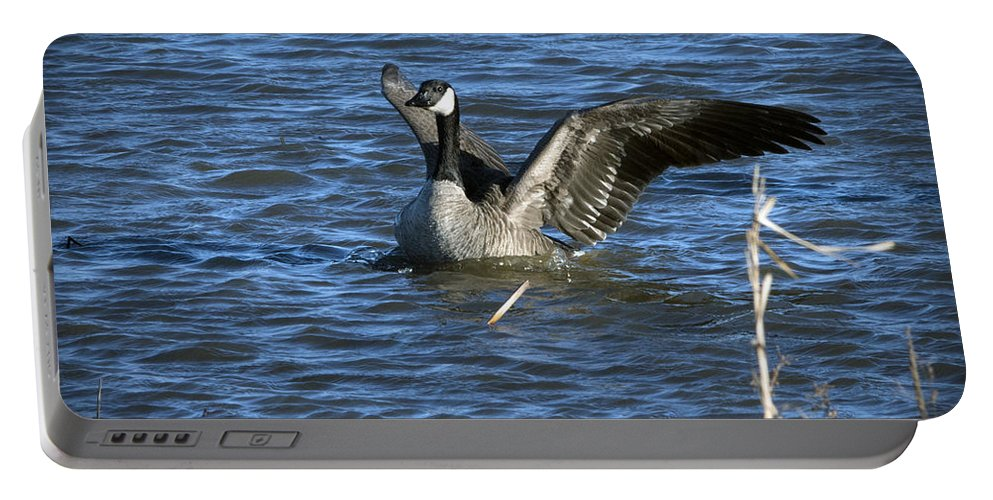 Marsh Portable Battery Charger featuring the photograph Perfect Landing by Jayne Gohr