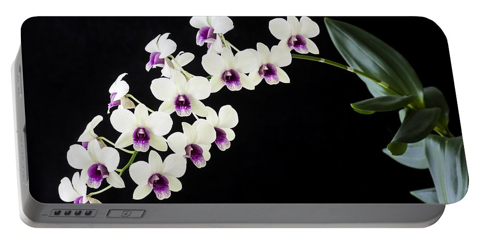 Orchids Portable Battery Charger featuring the photograph Perfect Phalaenopsis Orchid by Rich Franco