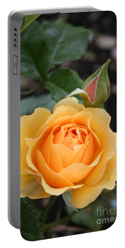 Rose Portable Battery Charger featuring the photograph Perfect Rose by Christiane Schulze Art And Photography