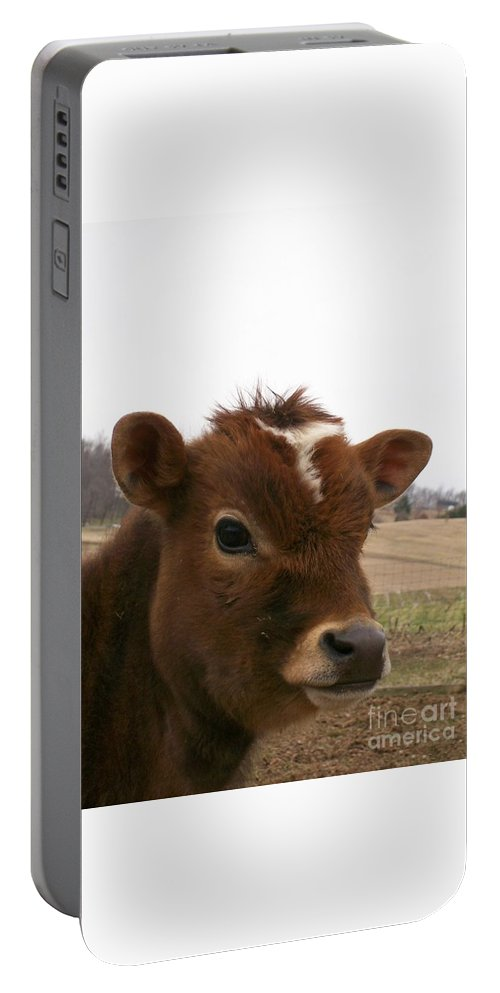 Cow Portable Battery Charger featuring the photograph Perfect Stance by Sara Raber