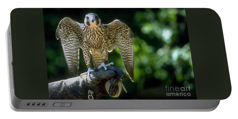 Bird Portable Battery Charger featuring the photograph Perigrine Falcon by Gary Gingrich Galleries