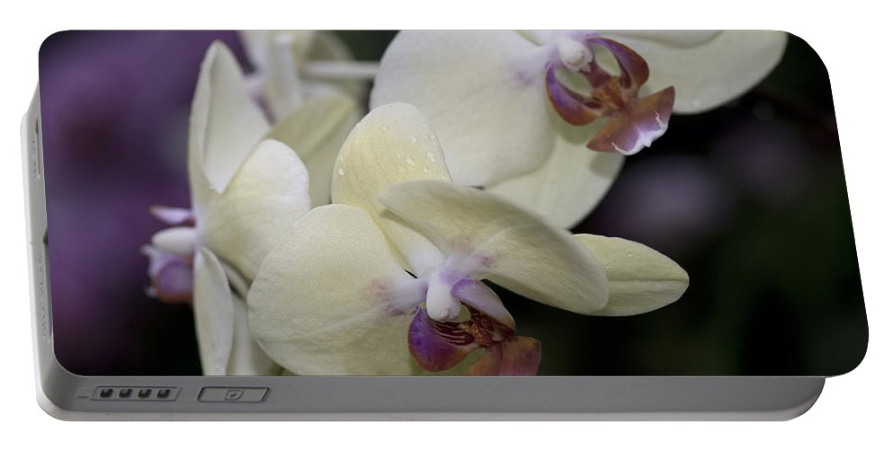 Yellow-green Orchid Portable Battery Charger featuring the photograph Phalaenopsis Ming Chao Dancer  8585 by Terri Winkler
