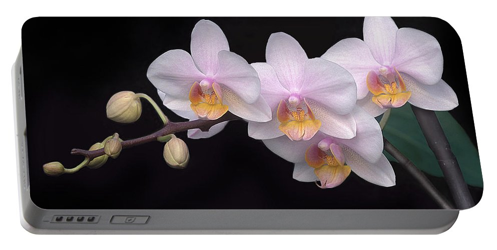 Orchid Portable Battery Charger featuring the photograph Phalaenopsis Orchid by Dave Mills