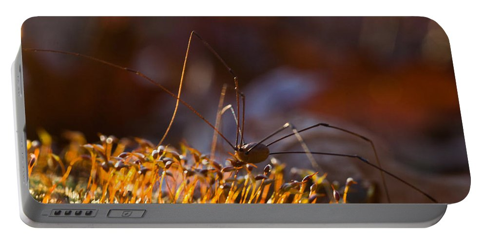 Phalangid Portable Battery Charger featuring the photograph Phalangid Among The Moss Capsules by Douglas Barnett